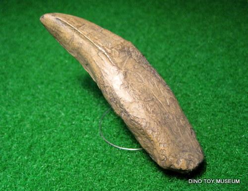 タルボサウルスの歯